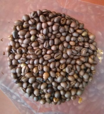 roasted-robusta-coffee-beans-resized