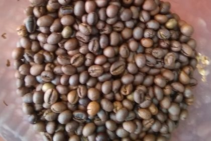 roasted coffee beans robusta